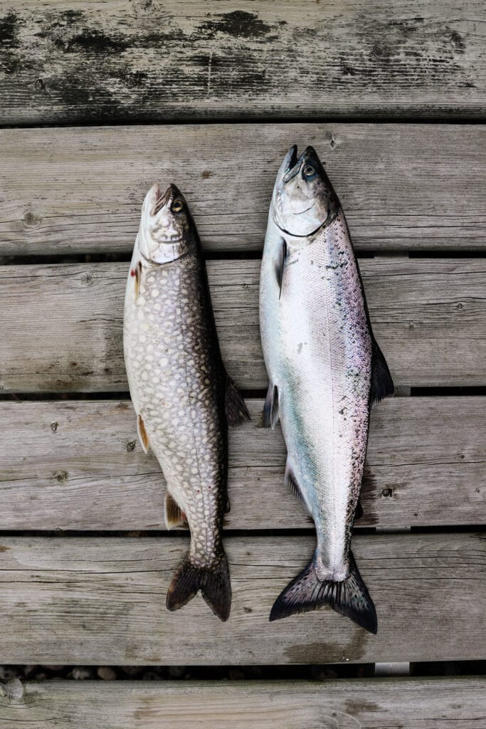 The BEST Salmon or lake trout, fresh fish recipe